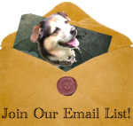 Join Our Email List & Get Festival Updates!
